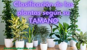 plantas según su tamaño