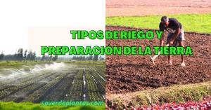 riego y preparación de los suelo