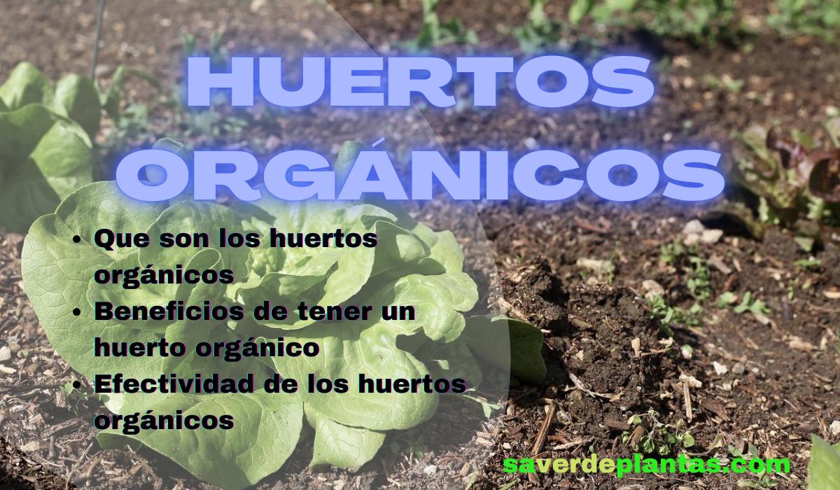 7 Beneficios de tener los huertos orgánicos