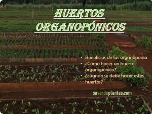 huertos organopónicos